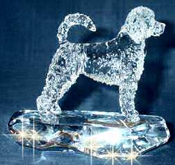 Crystal Portuguese Water Dog Retriever Cut